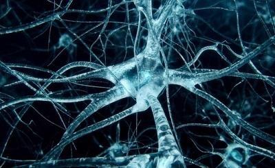 Lão hóa thần kinh có thực sự nguy hiểm không?