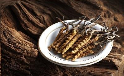 Đông trùng hạ thảo nên uống trước hay sau ăn?